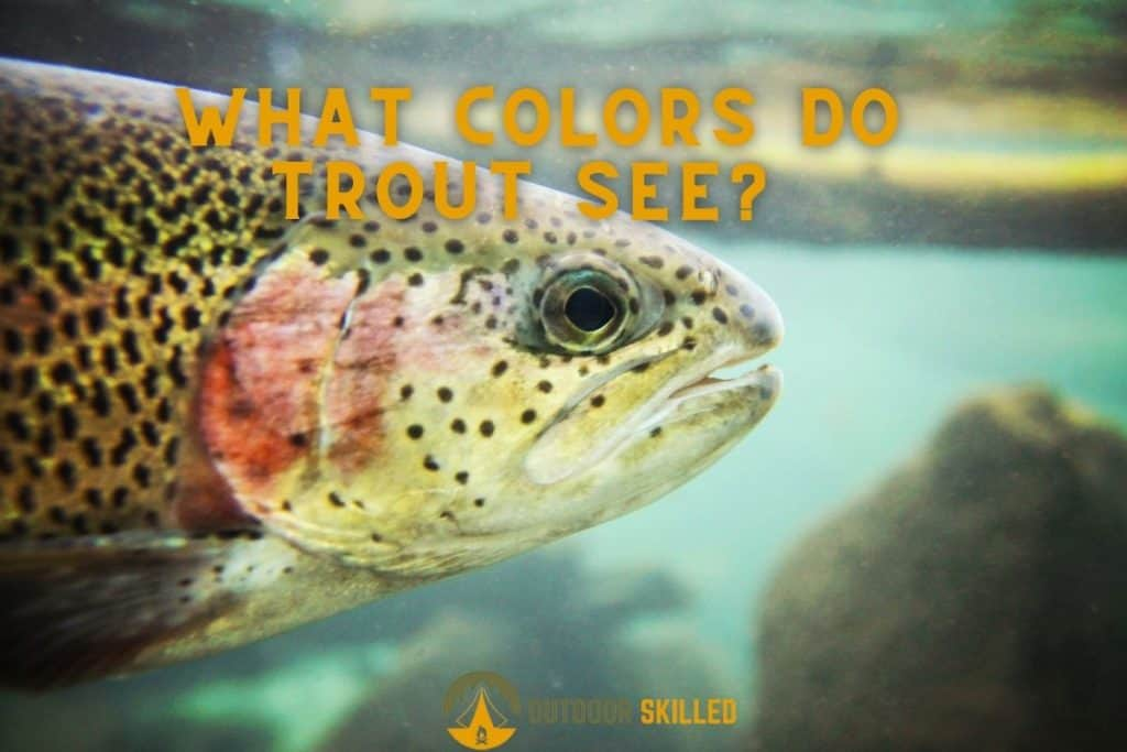 trout swimming underwater to illustrate what colors do trout see best