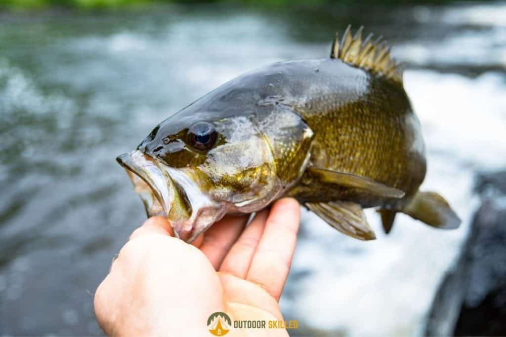 bass to answer are baitcasters good for bass