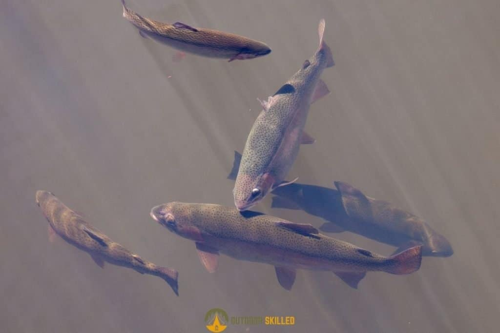 lake trout to show how to fish for lake trout from shore