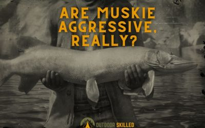 Are-Muskie-Aggressive-featured