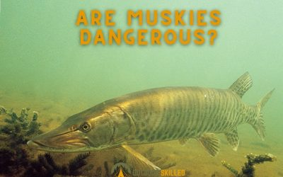 Are-Muskies-Dangerous-Featured