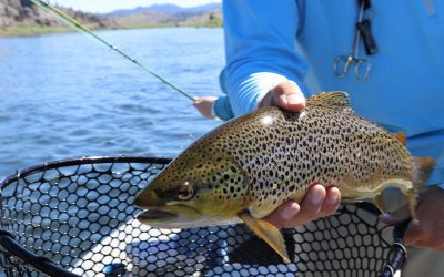 Best Trout Fishing Lines
