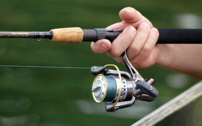 Best Trout Spinning Reels
