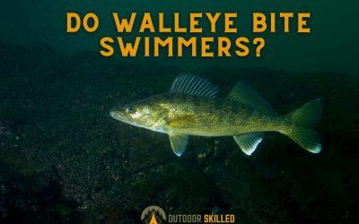Do-Walleye-Bite-Swimmers