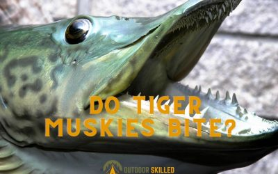 Do-tiger-muskies-bite-at-night-featured