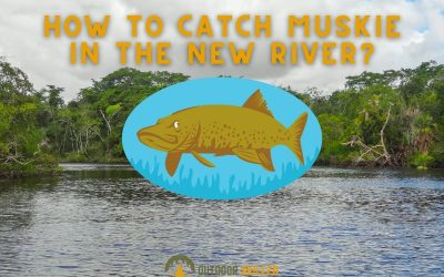 How-to-catch-Muskie-in-the-new-river