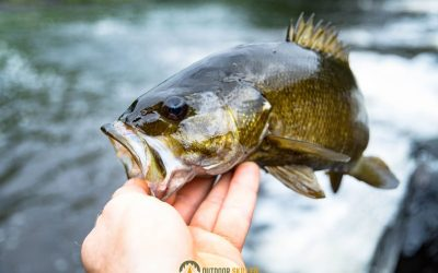 are-baitcasters-good-for-bass-featured