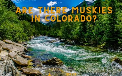 are-there-muskies-in-Colorado-featured
