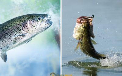 bass-vs-trout-featured