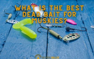 best-dead-bait-for-muskies-featured