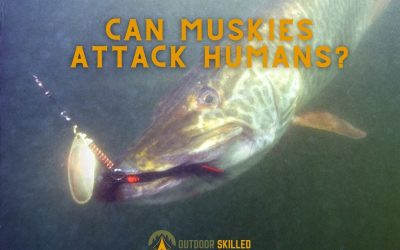 can-muskies-attack-humans-featured