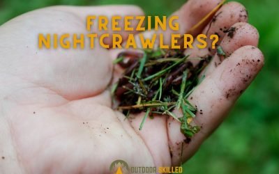 can-night-crawlers-be-frozen-featured-image