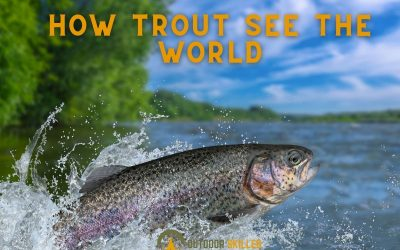 can-trout-see-you-featured-image