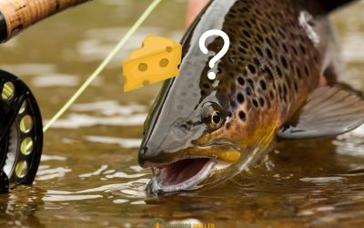 can-you-fish-trout-with-cheese-featured