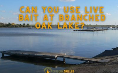 can-you-use-live-bait-at-branched-oak-lake-featured