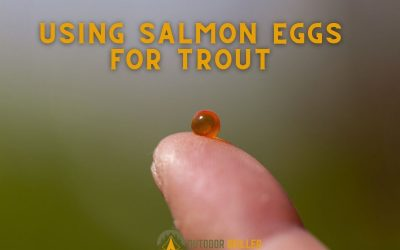can-you-use-salmon-eggs-for-trout-fishing-featured-image