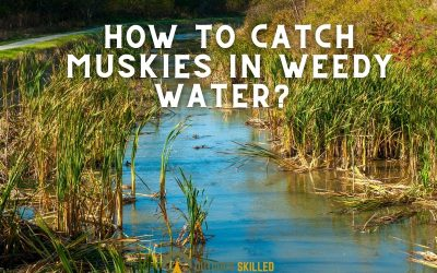 catch-muskies-in-weedy-water-featured