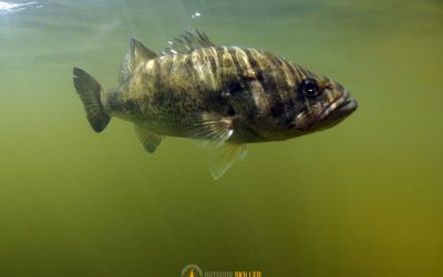 cold-muddy-water-bass-fishing