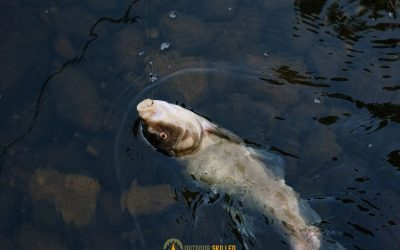 cold-water-bass-fishing-featured