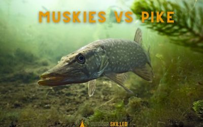 do-muskie-eat-pike-featured
