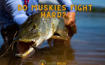 do-tiger-muskies-fight-hard-featured-1