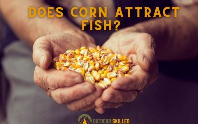 does-corn-attract-fish-featured