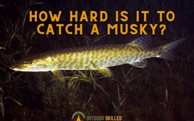 how-hard-is-it-to-catch-a-muskie-featured