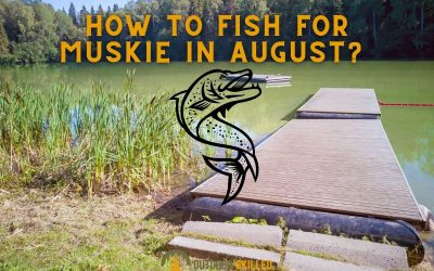 how-to-catch-a-muskie-in-August-featured-image