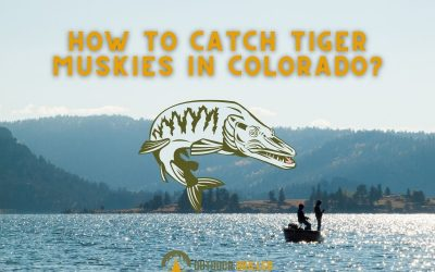 how-to-catch-a-tiger-muskie-in-colorador-featured-image