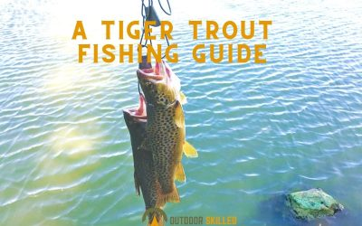 how-to-catch-tiger-trout-from-shore-featured-image