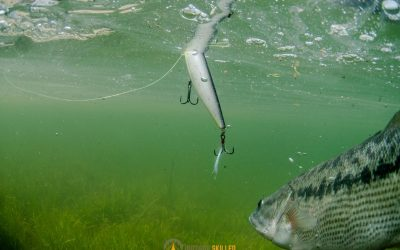 how-to-fish-for-bass-from-shore
