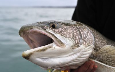how-to-fish-for-lake-trout-in-the-summer-featured