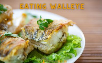 is-walleye-good-to-eat-featured