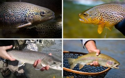 trout-changing-color
