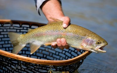 trout-fishing-basics-featured