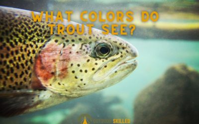 what-colors-do-trout-see-best-featured