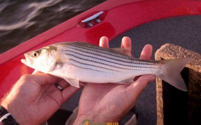 what-size-reel-for-striped-bass-featured