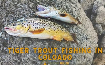 where-to-catch-tiger-trout-in-Colorado-featured-image