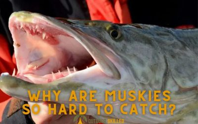 why-are-muskies-so-hard-to-catch-featured
