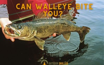will-a-walleye-bite-you-featured-image